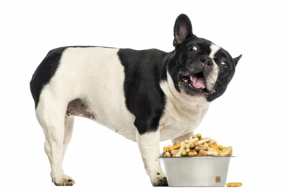 French Bulldog Care: 13 Best Dog Food Brands