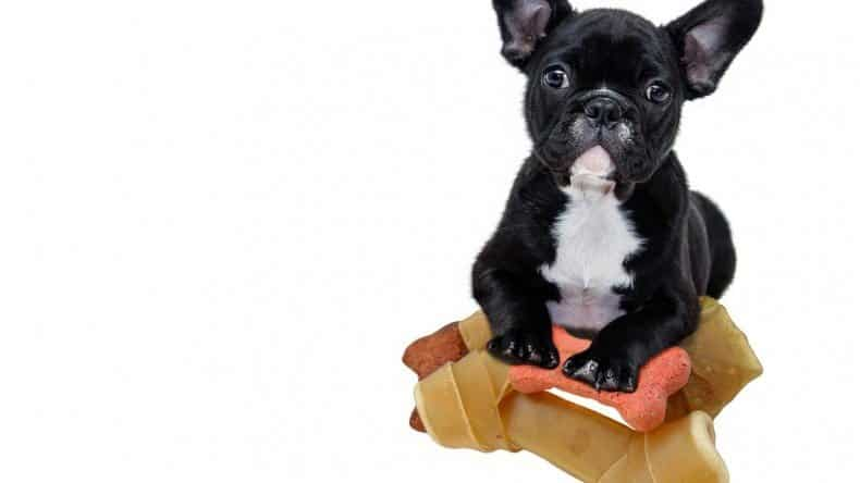 A Thorough Understanding of Nutrients for French Bulldogs